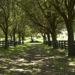 larege estate landscape services