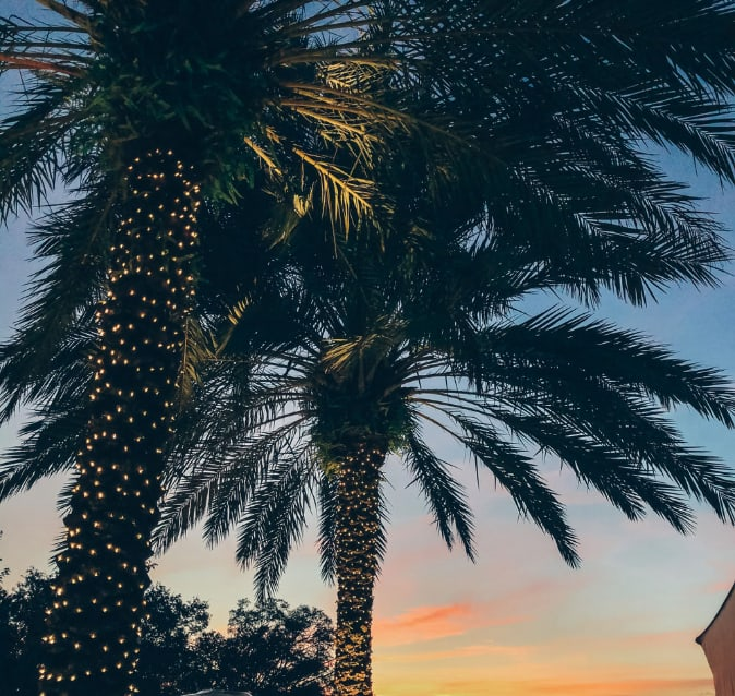 Palm tree lit with decorative lights in during sunrise