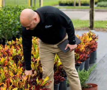 Sunrise Landscape worker inspecting plants