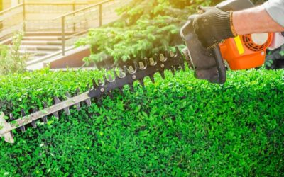 How Can Your Business Benefit From Regular Landscaping?