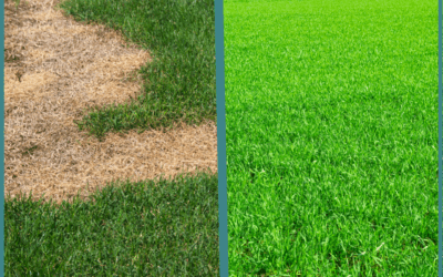Preventing Heat Stress on Your Commercial Lawn