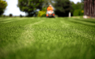 Create a Commercial Landscaping Budget That Works